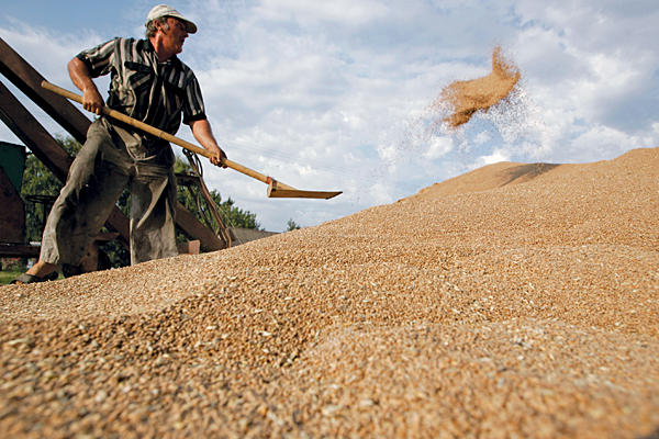 grain export russia